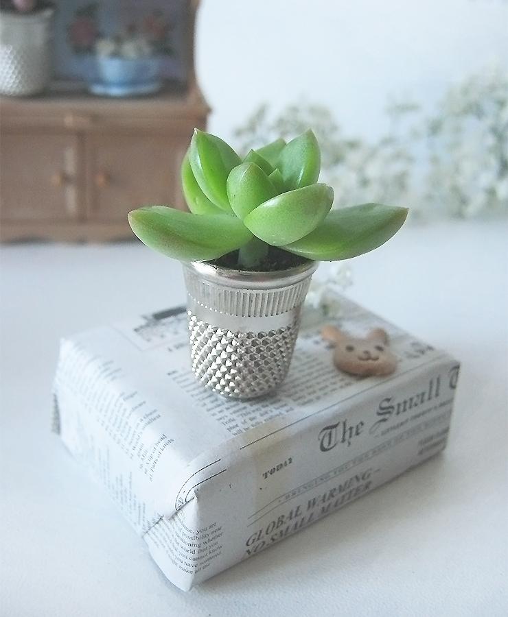plante-de-coudre-5