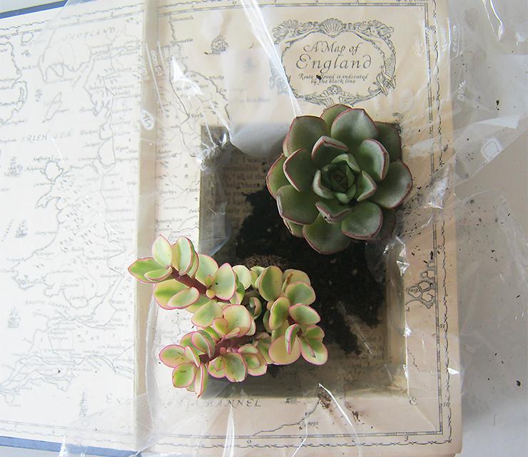 diy-plante-livre-10