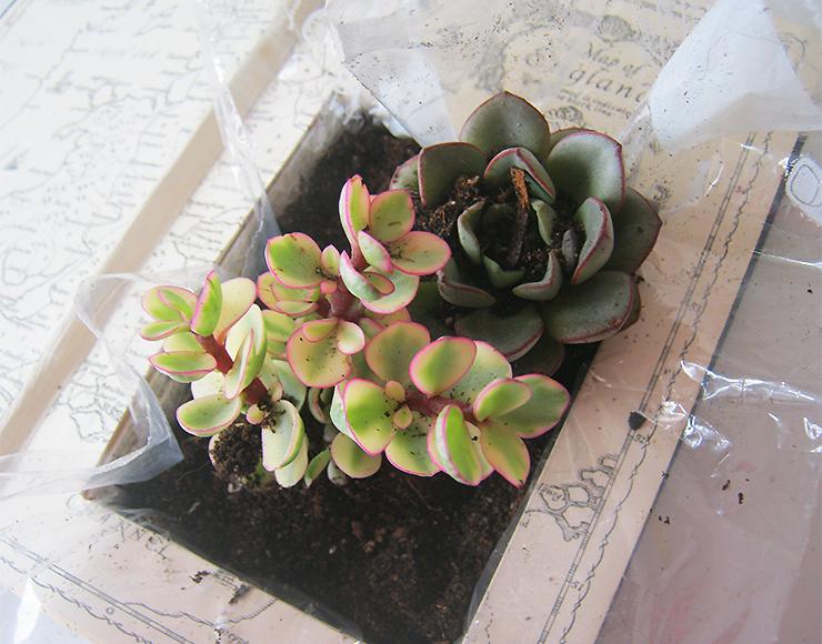 diy-plante-livre-11