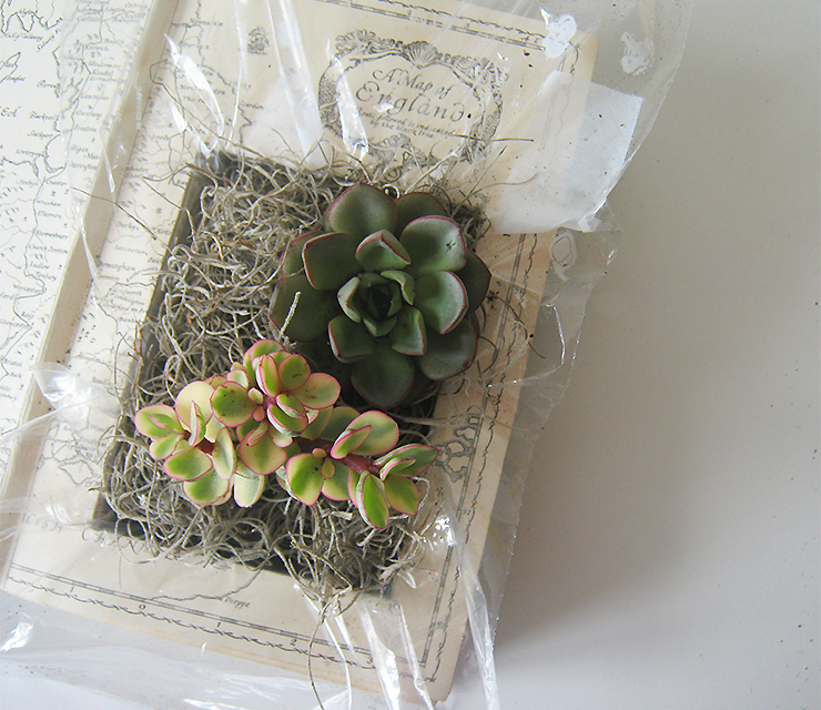 diy-plante-livre-12