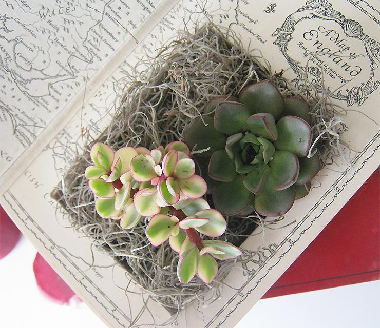 diy-plante-livre-13