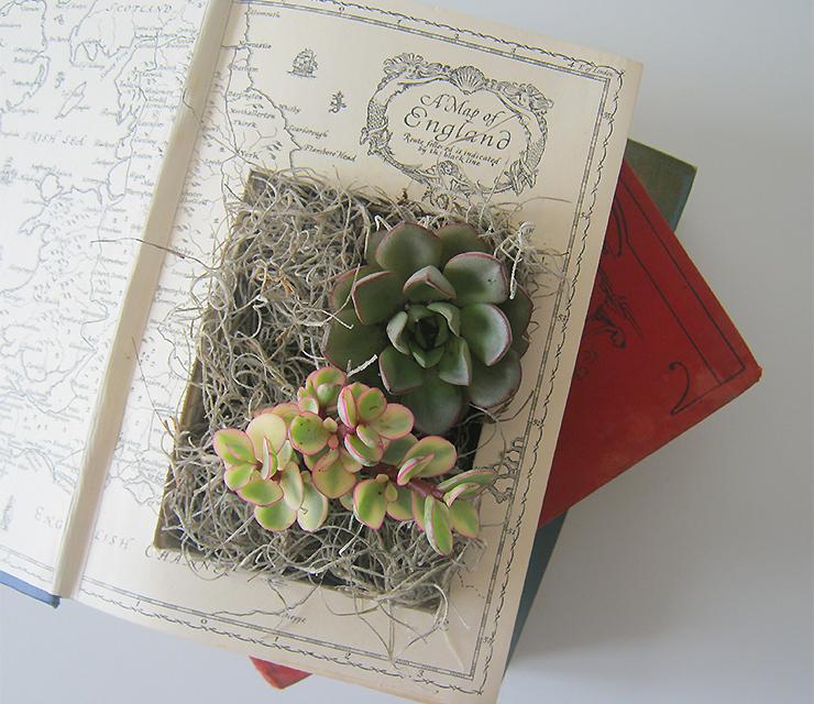 diy-plante-livre-2