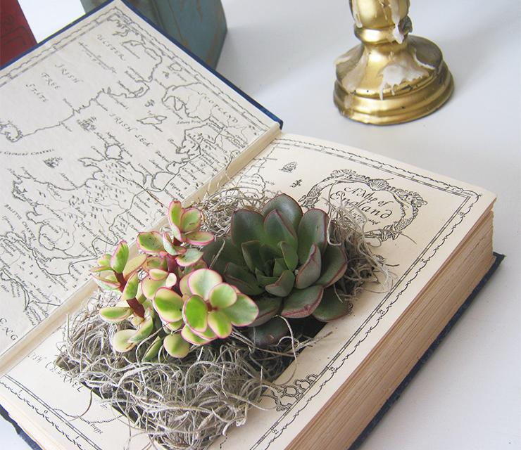 diy-plante-livre-4
